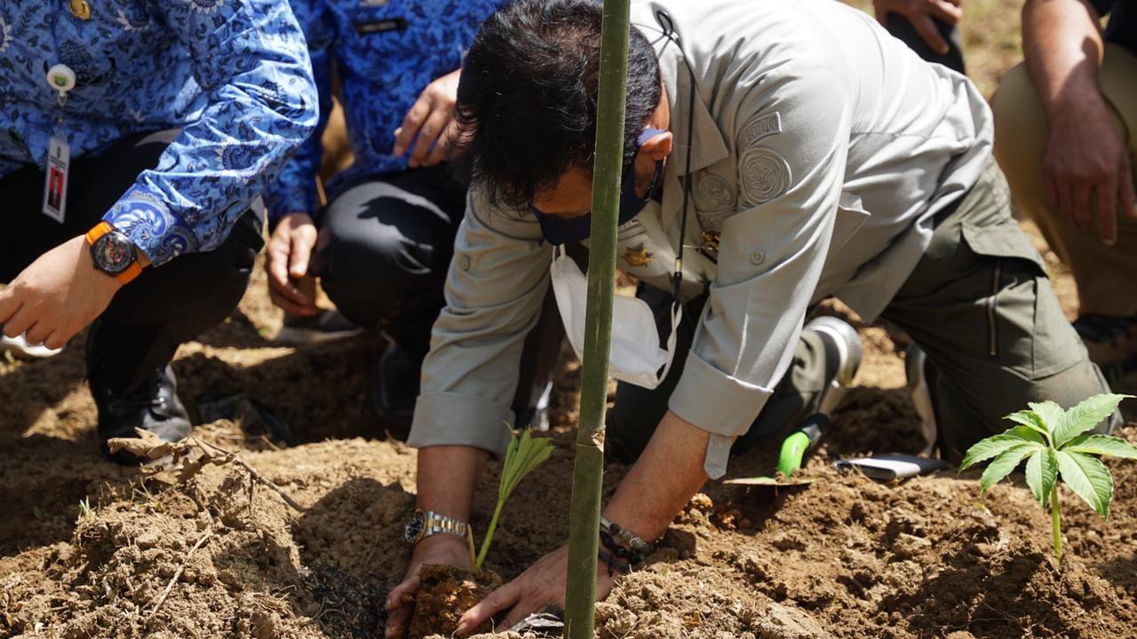 Kementan Garap 1.000 Hektare Lahan Porang di Kabupaten Pangkep